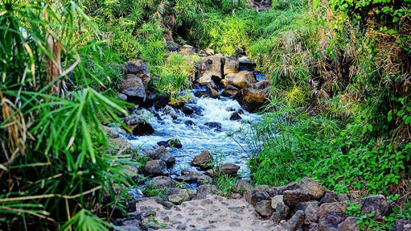 Mzima-Springs-2